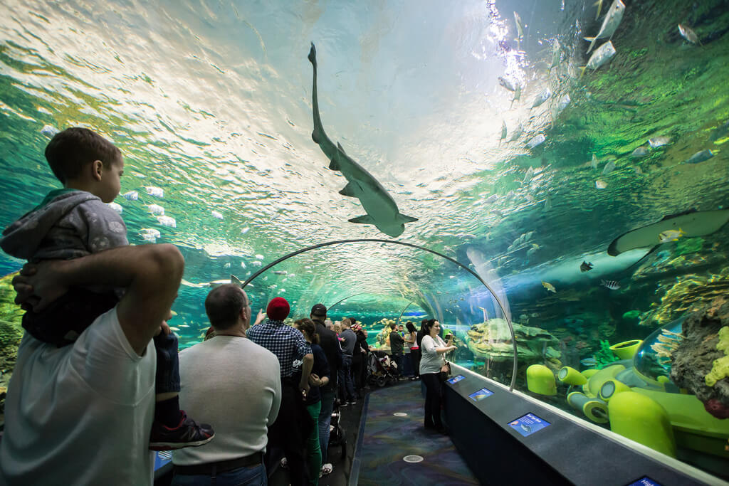 illustration visiter toronto Ripley's Aquarium